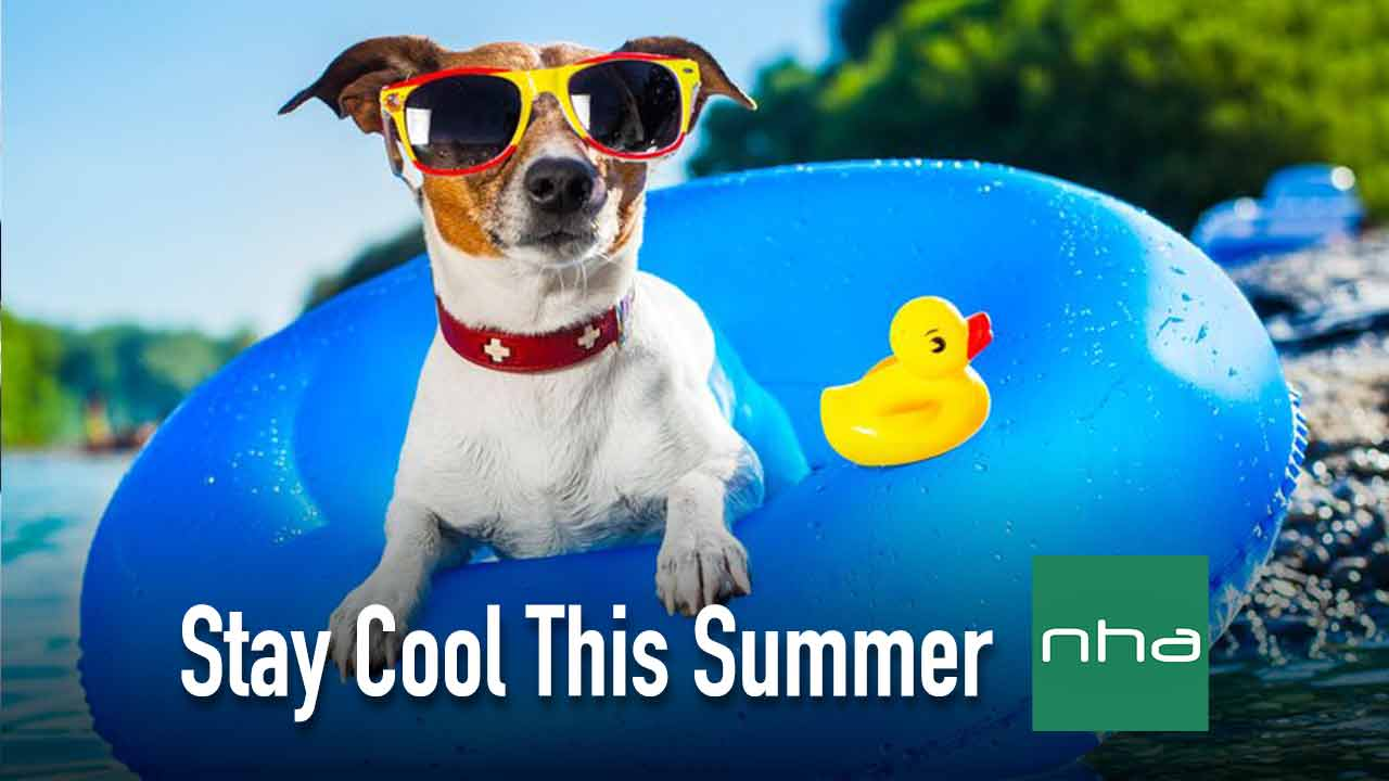 dog in sunglasses cooling off in water